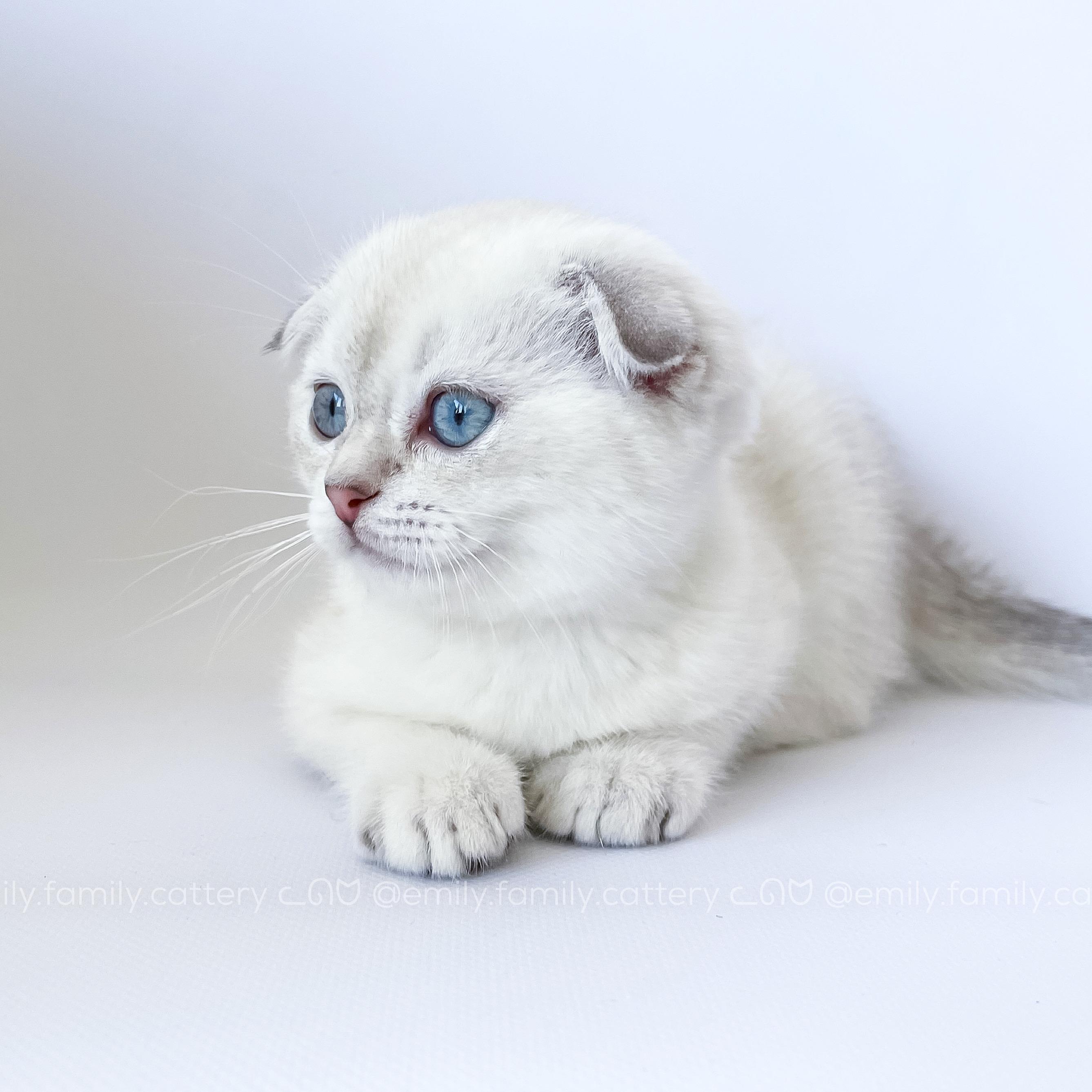 Our kitten - Alaska