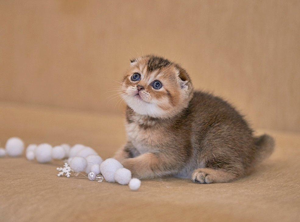 Our kitten - Geneva