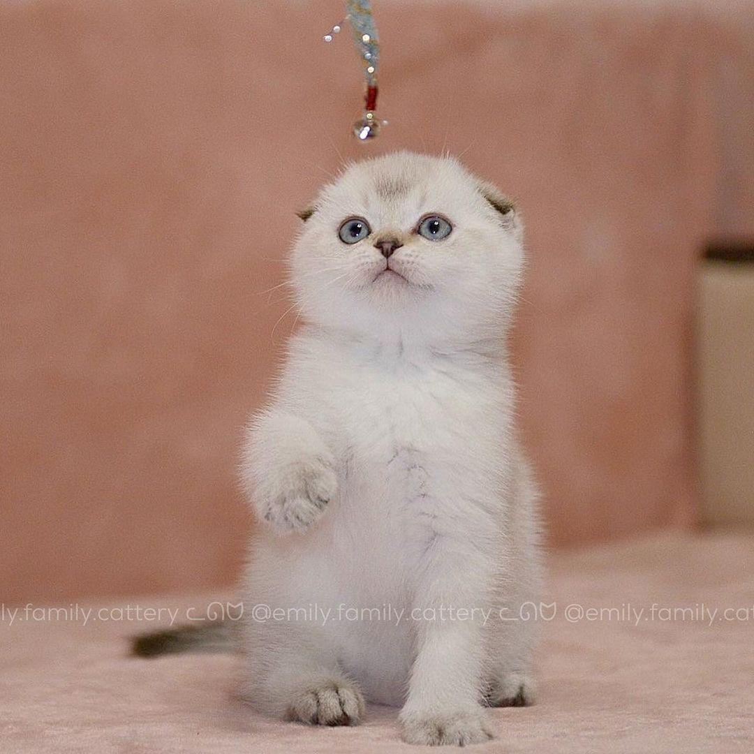 Our kitten - Hermes