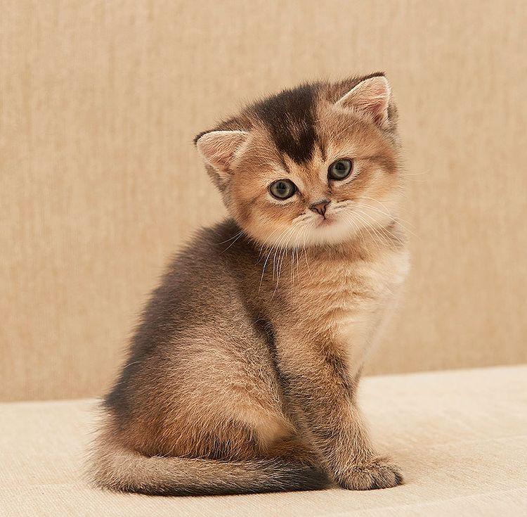 Our kitten - Indigo