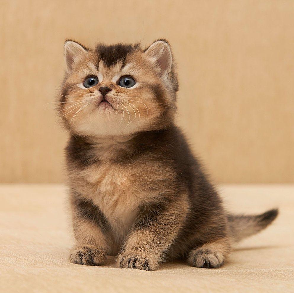 Our kitten - Iris