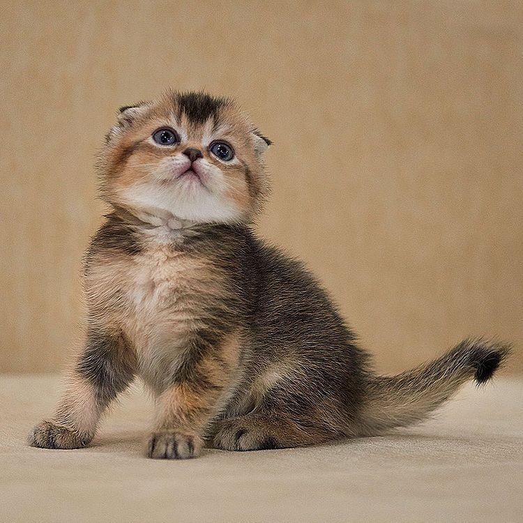 Our kitten - Isa