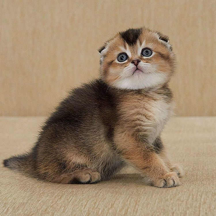 Our kitten - Isabella