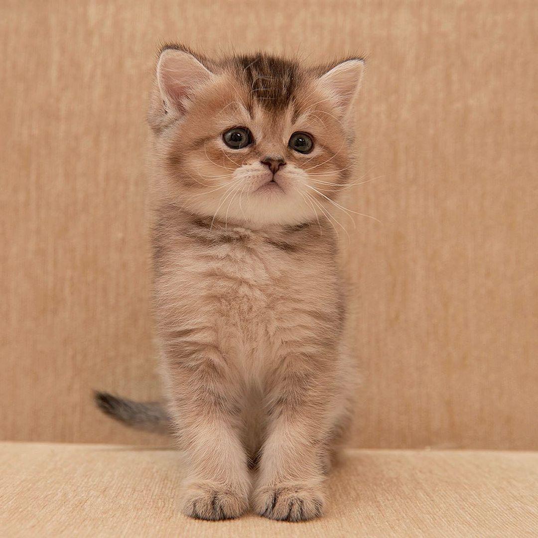 Our kitten - Izmir